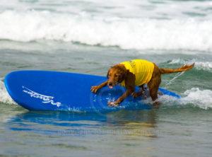 Surf Dog - Riding the Rail