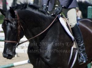 Black Show Horse