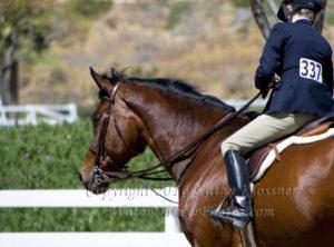 Jumper Horse & Rider