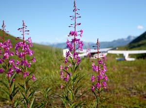 Bear Creek landing strip Alaska