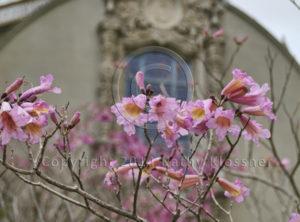 Balboa Park Building & Spring Flowers - San Diego
